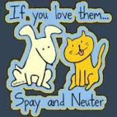 spay or neuter clipart